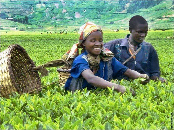 Light black Rwanda Tea 250 g